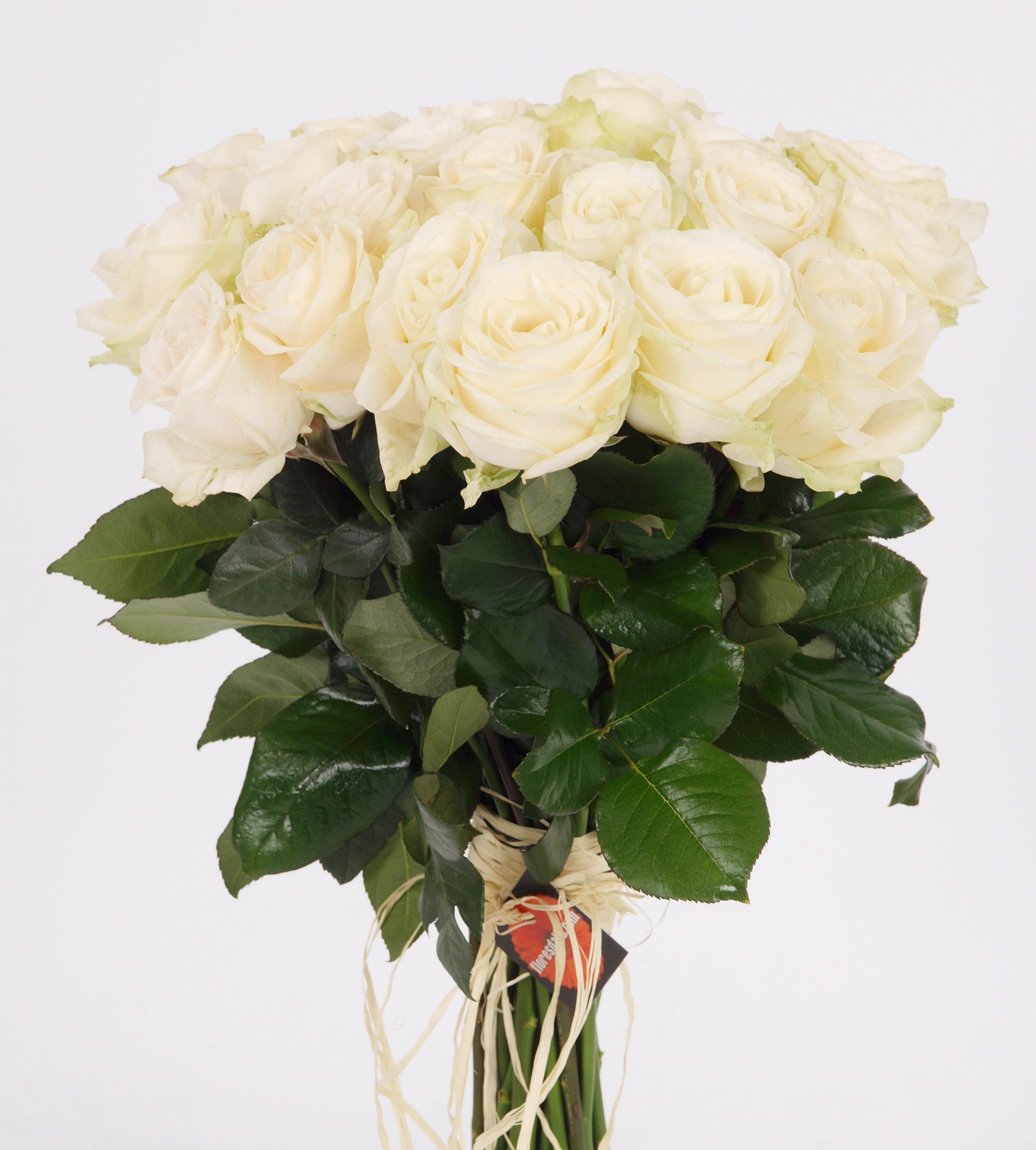 8650b87a4a7c2 24 Rosas Blancas tallo largo ramo de rosas naturales de tallo largo