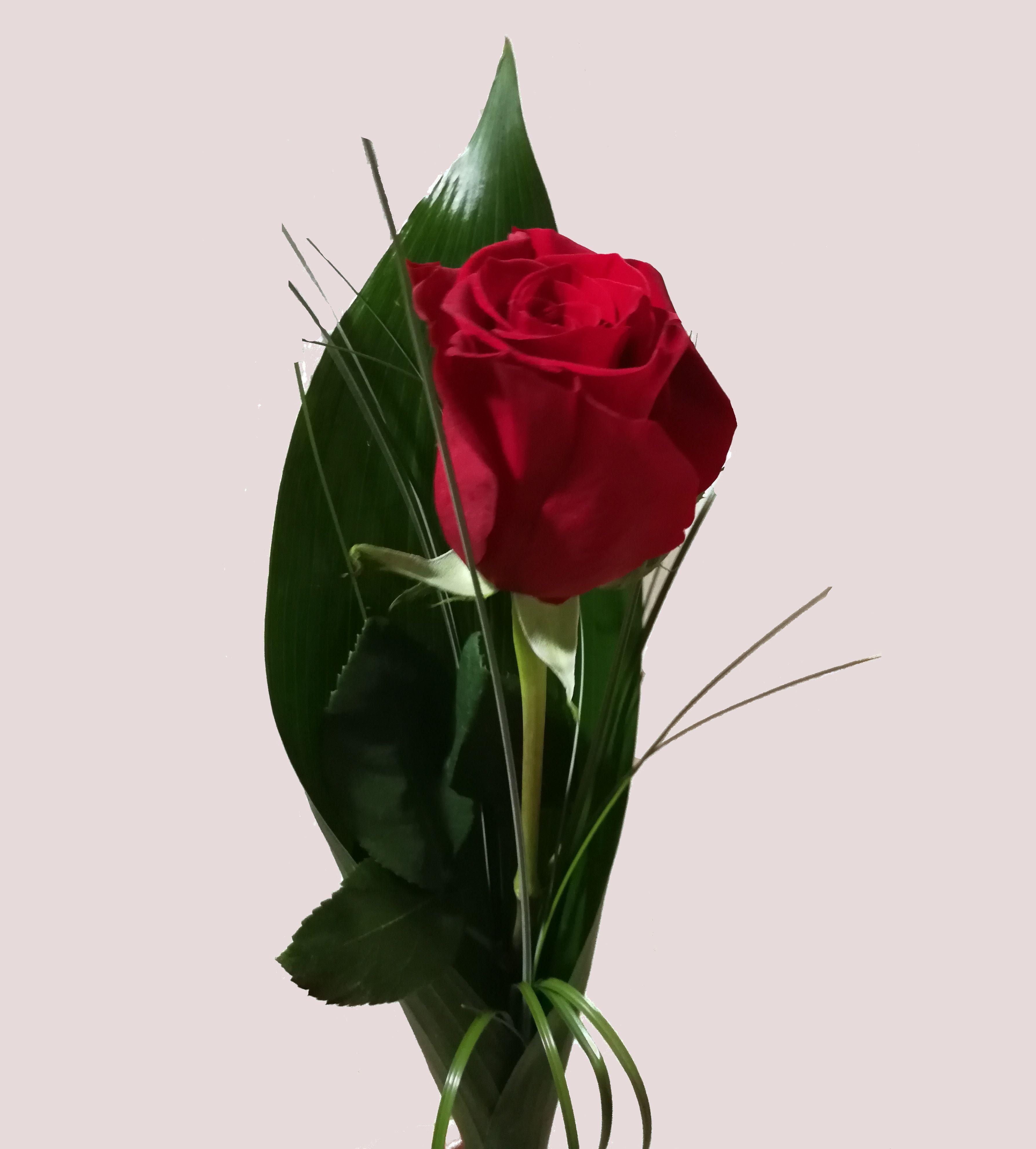 Rosa Roja Flores Dalia
