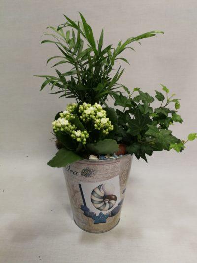 Plantas para regalar