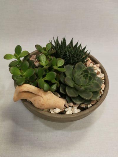 regalar cactus