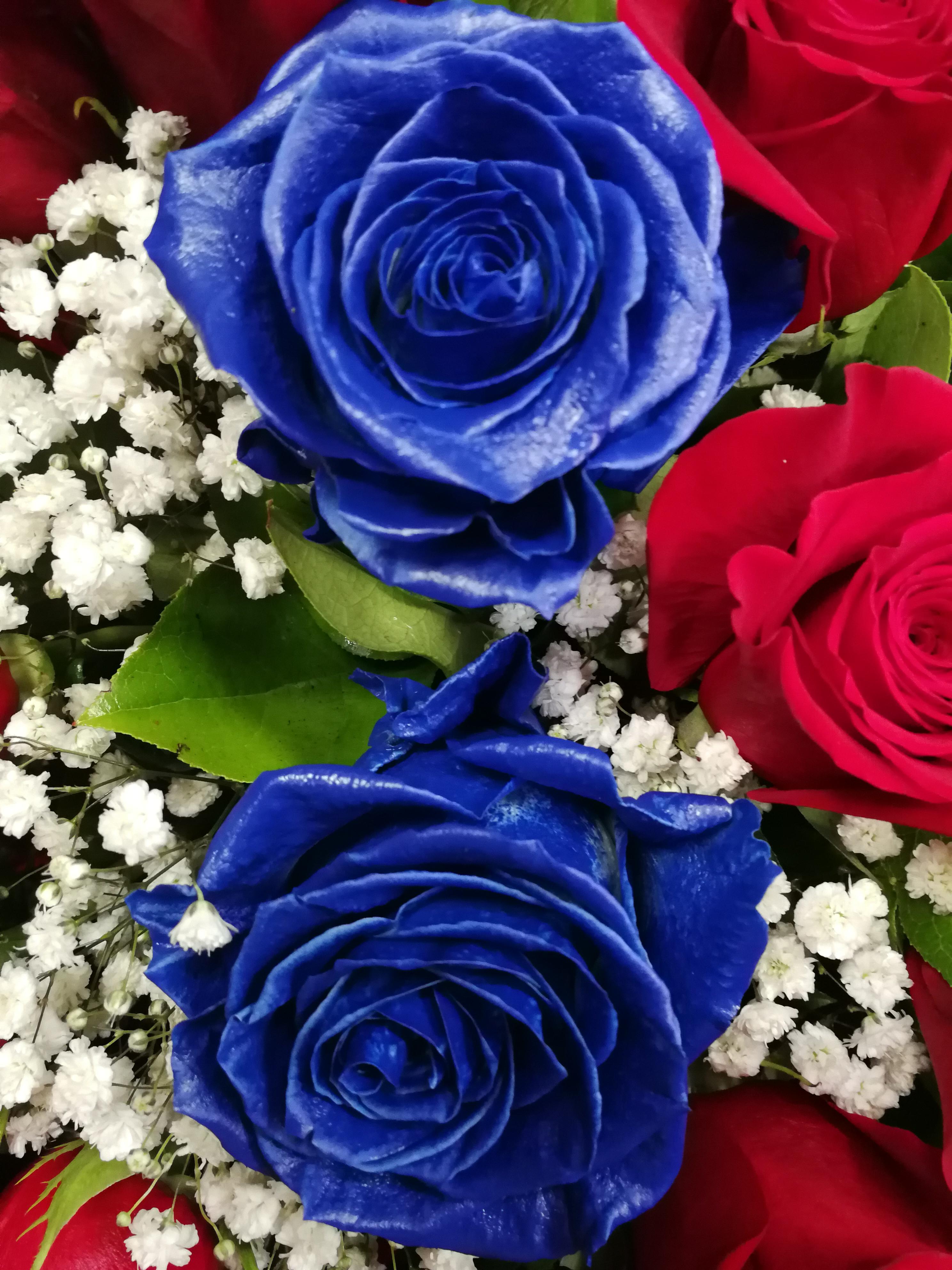 Ramo 12 Rosas Rojas Con Dos Azules Ramo De 14 Rosas Naturales Tallo