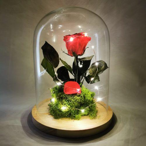 Cúpula rosa eterna con luz led