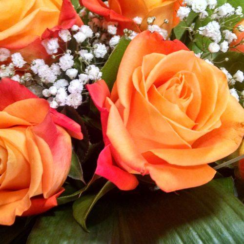 rosas color naranja